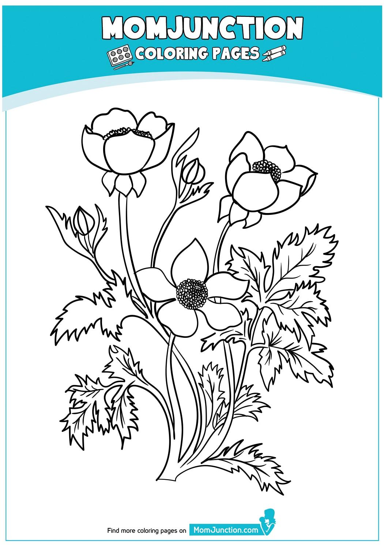 Buttercup-Flower