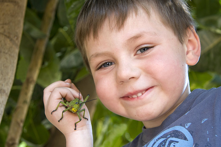 Fun Activities For Kids - Catch A Bug