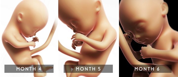 Changes in the fetus