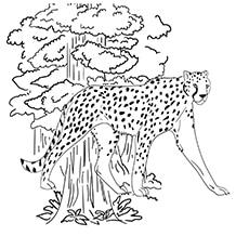 Cheetah Blackdot