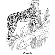 Cheetah-in-forest