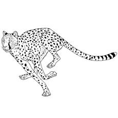 Cheetah-jump-with-angry