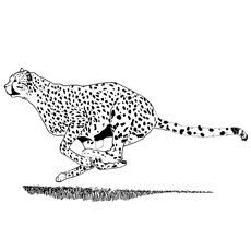 Cheetah-jumping-on-the-field