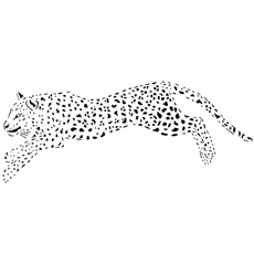 Cheetah-jumping