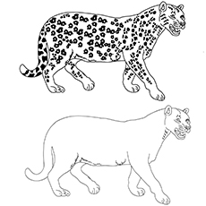Cheetah-with-friend for coloring images