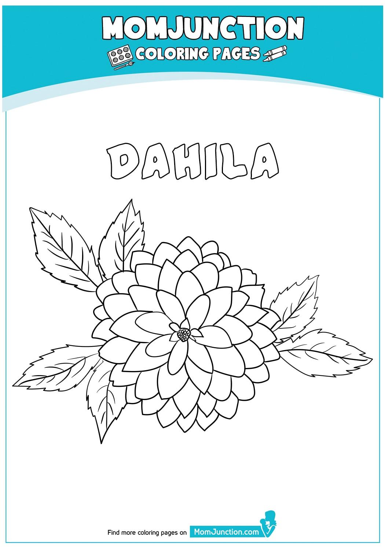Dahila-18