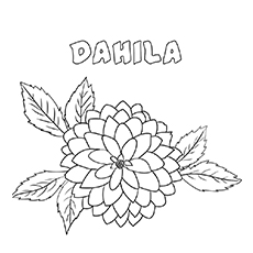 Dahila coloring pages