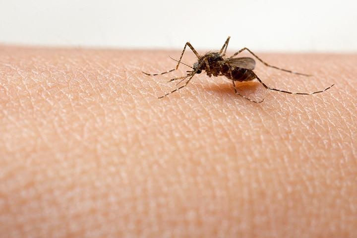 Dengue Symptoms In Babies