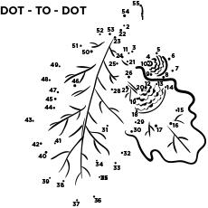 Dot to dot Oak