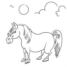 Funny Farm Pony Horse