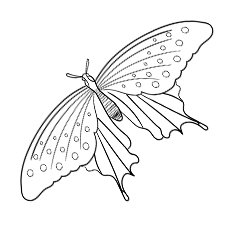 Giant Swallowtail Coloring Sheet for Kids