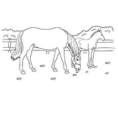 Free Printable Grazzing Mare Horse to Color