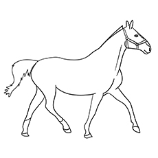 Heavy Warm Blood Mare Coloring Page
