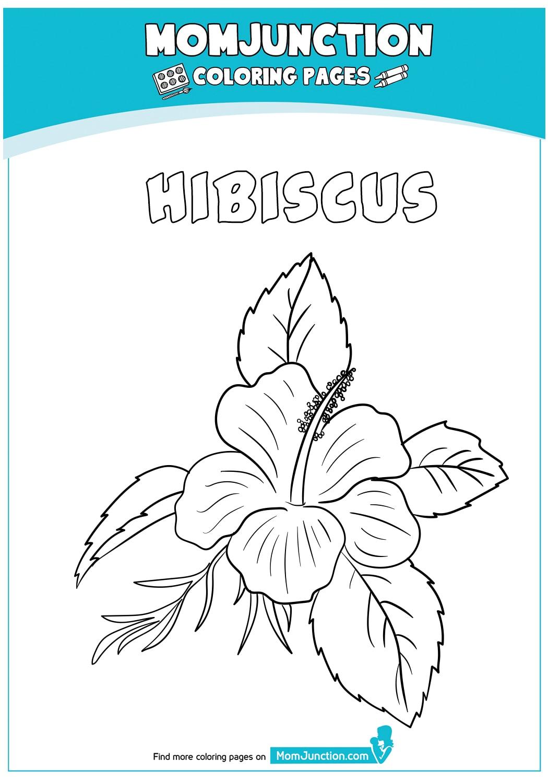 Hibiscus-Flower-18