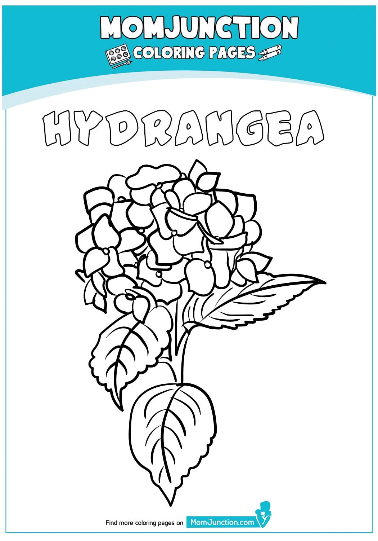 Hydrangea-Flower-18