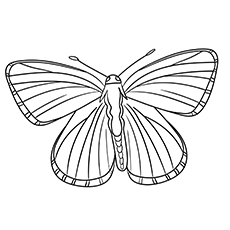 Lycaenidae Butterflies to Color