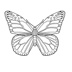 Monarch Butterfly Pic for Kids to Color