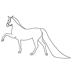 Morgan Horse Lifting Left Front Leg Coloring Page