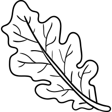 Oak Leaf during Fall Coloring Page