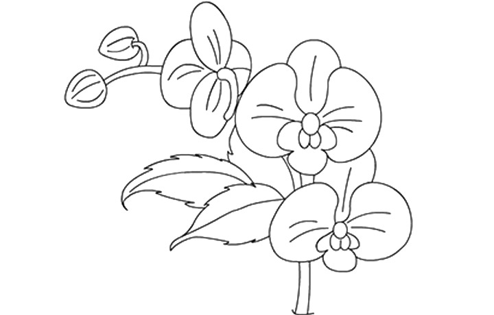 Orchid Coloring Pages Eume Ipomoea Flower