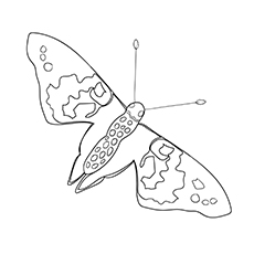 Printable Painted Lady Butterfly Pictures to Color