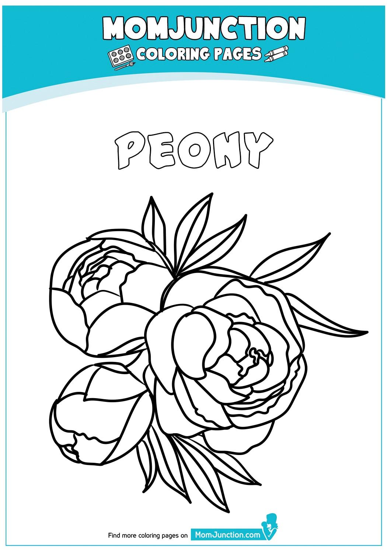 Peony-Flower