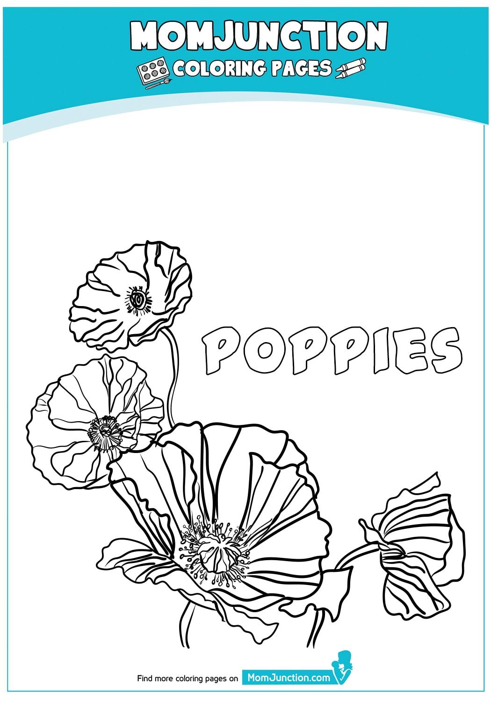 Poppies-18
