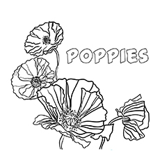 Poppies Images coloring