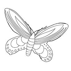 Queen Alexandras Birdwing Butterfly Coloring Sheet to Print