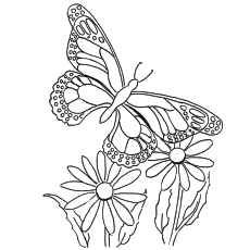 Flying Queen Butterfly Coloring Pages Picture To Color