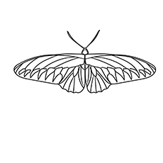 Rajah Brookes Birdwing Butterfly Picture to Color for Kids
