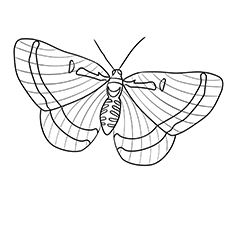 Riodinidae Butterfly Pic Coloring