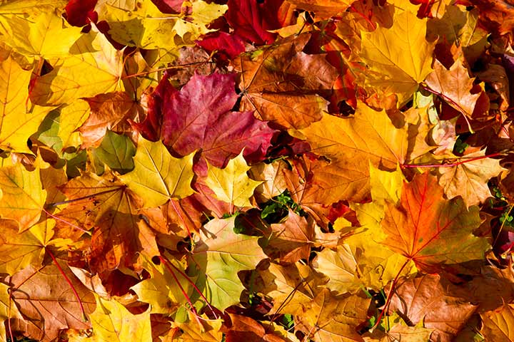 Fun Activities For Kids - Scrapbook With Autumn Leaves