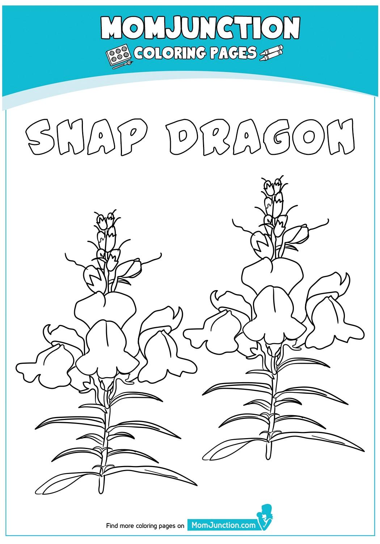 Snap-Dragon-18