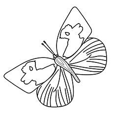 Southern Dogface Butterfly Printable to Color