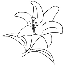 Tee Lily Coloring Pages