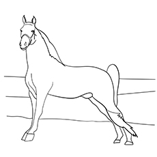 Coloring Page Of Tennessee Walking Horses