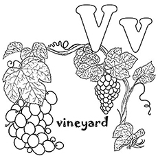 The-'V'-For-Vine