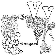 Letter V For Vineyard Coloring Pages