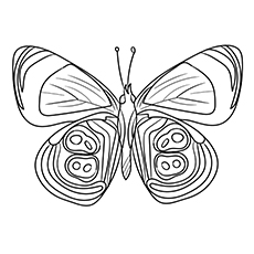 Coloring Page of Species 88 Butterfly