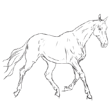 Akhal Teke Horse Coloring Worksheets