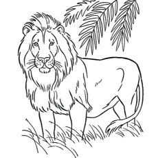 Amazing The American Lion Coloring Pages
