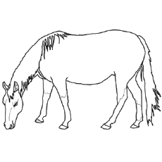 coloring page of american quarter horse eating grass - Horse Color Pages