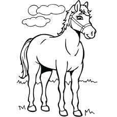 graphic relating to Printable Horse Picture identified as Best 55 Cost-free Printable Horse Coloring Webpages On the internet