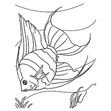 the angelfish - Printable Fish Coloring Pages