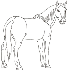 Free Printable Arabian Horse Image for Coloring