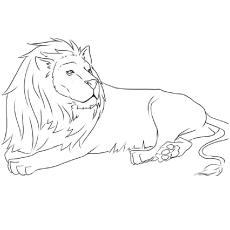 The Asiatic Lion Coloring Pages