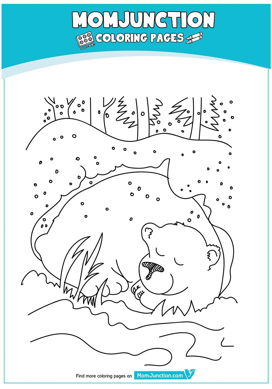 The-Bear-Hibernating-17