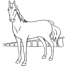 Belgian Horse Image for Kids to Color