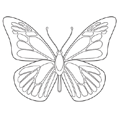 Blue Morpho Butterfly Coloring Page